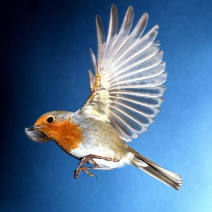 WILD BIRD CARE